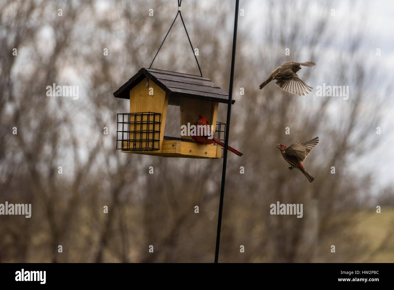 Birds at the feeder while  other birds freeze framed in mid air - Stock Image
