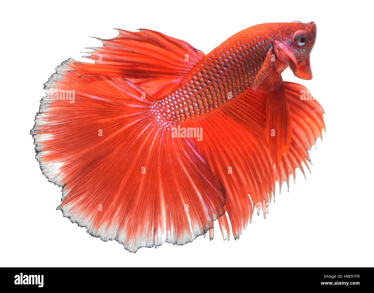 Butterfly Fish Cut Out Stock Images & Pictures - Alamy