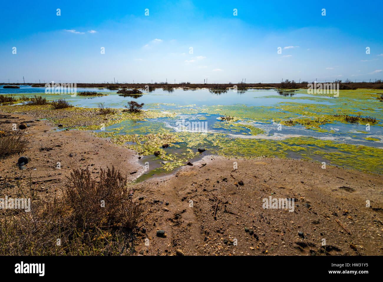 Contaminated lake - Stock Image