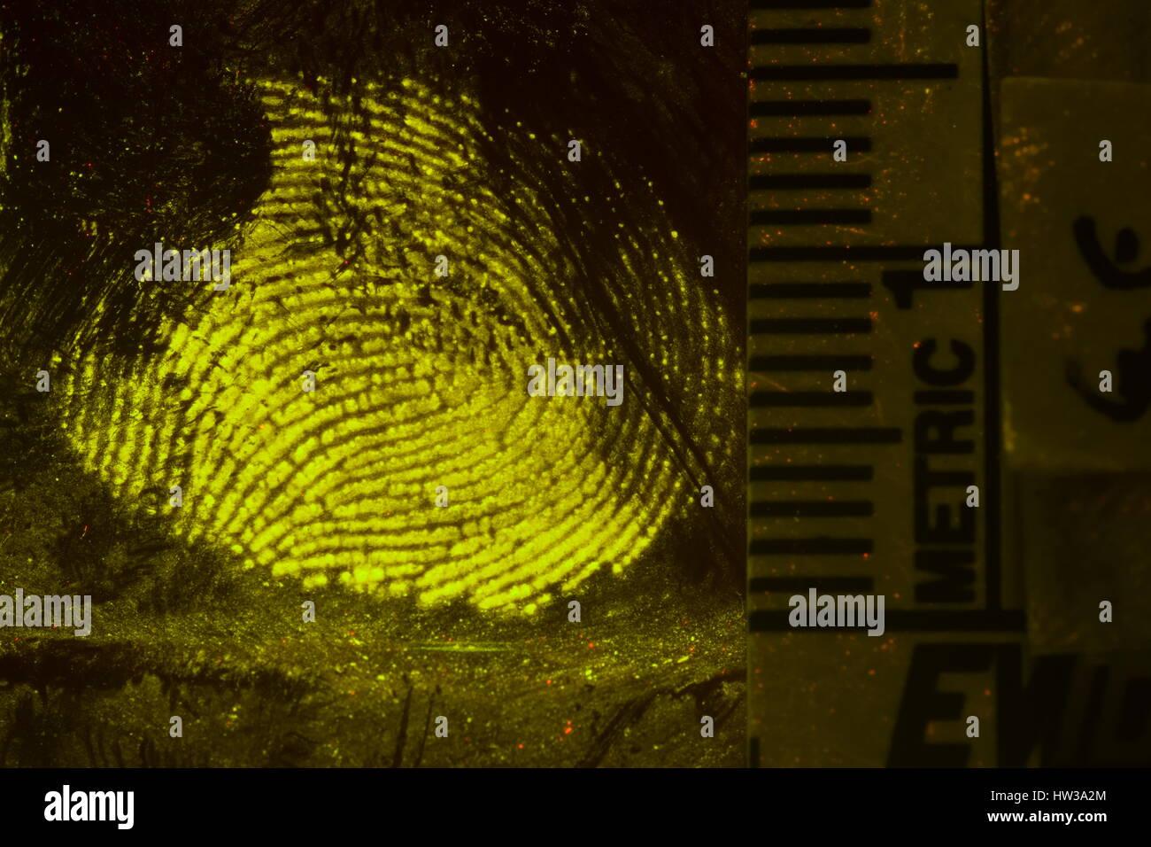macro photography of processed fingerprints - Stock Image
