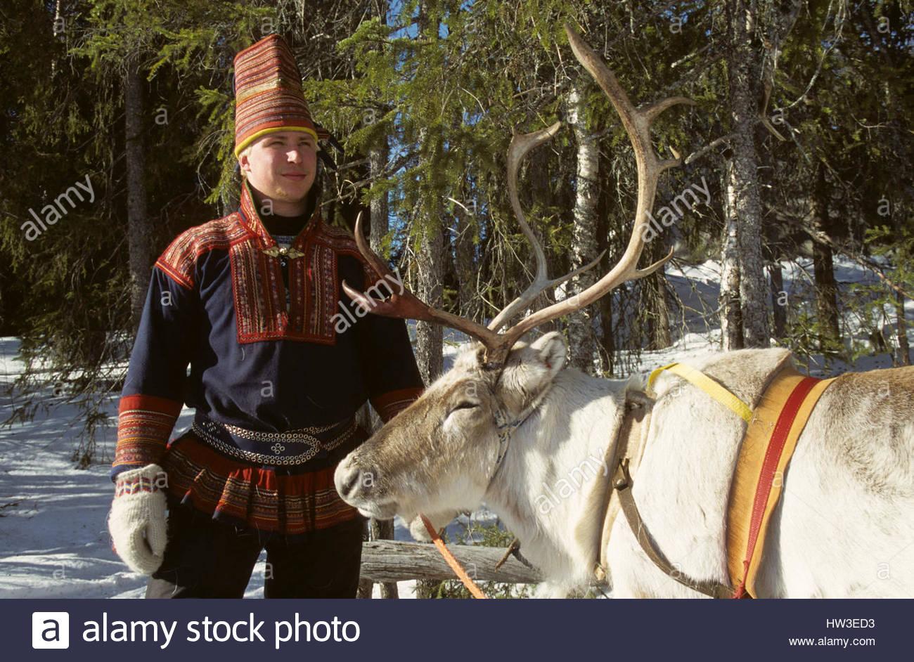 Un lapon et son renne pres de Rovaniemi. *** A laplander with his reindeer. - Stock Image