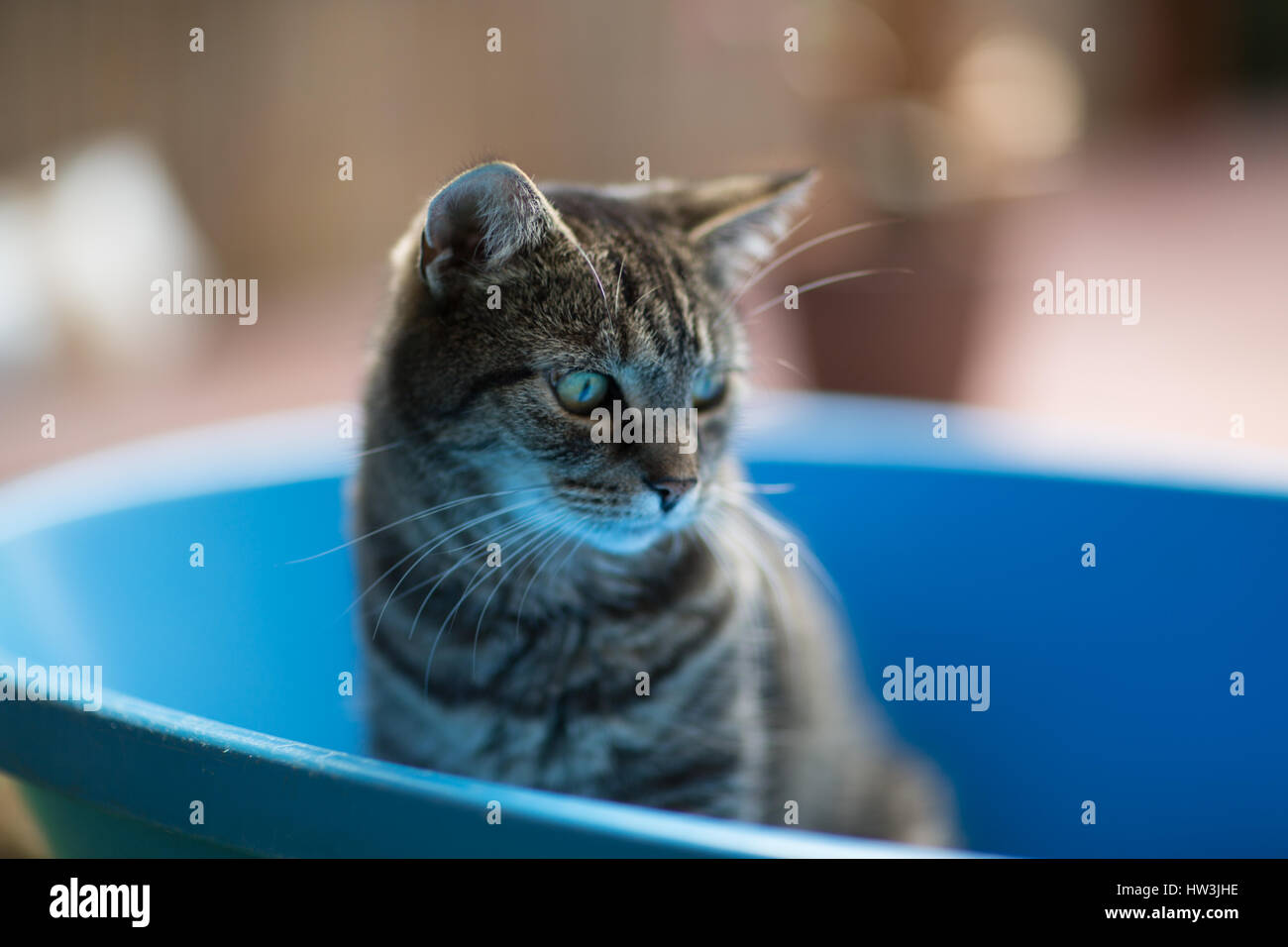 House cat in bath tube - Stock Image