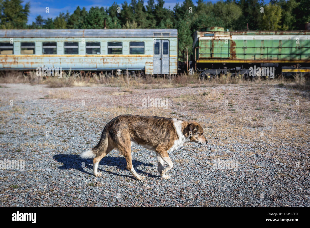 Old train in abandoned Yaniv town railway station, Chernobyl Nuclear Power Plant Zone of Alienation around the nuclear - Stock Image