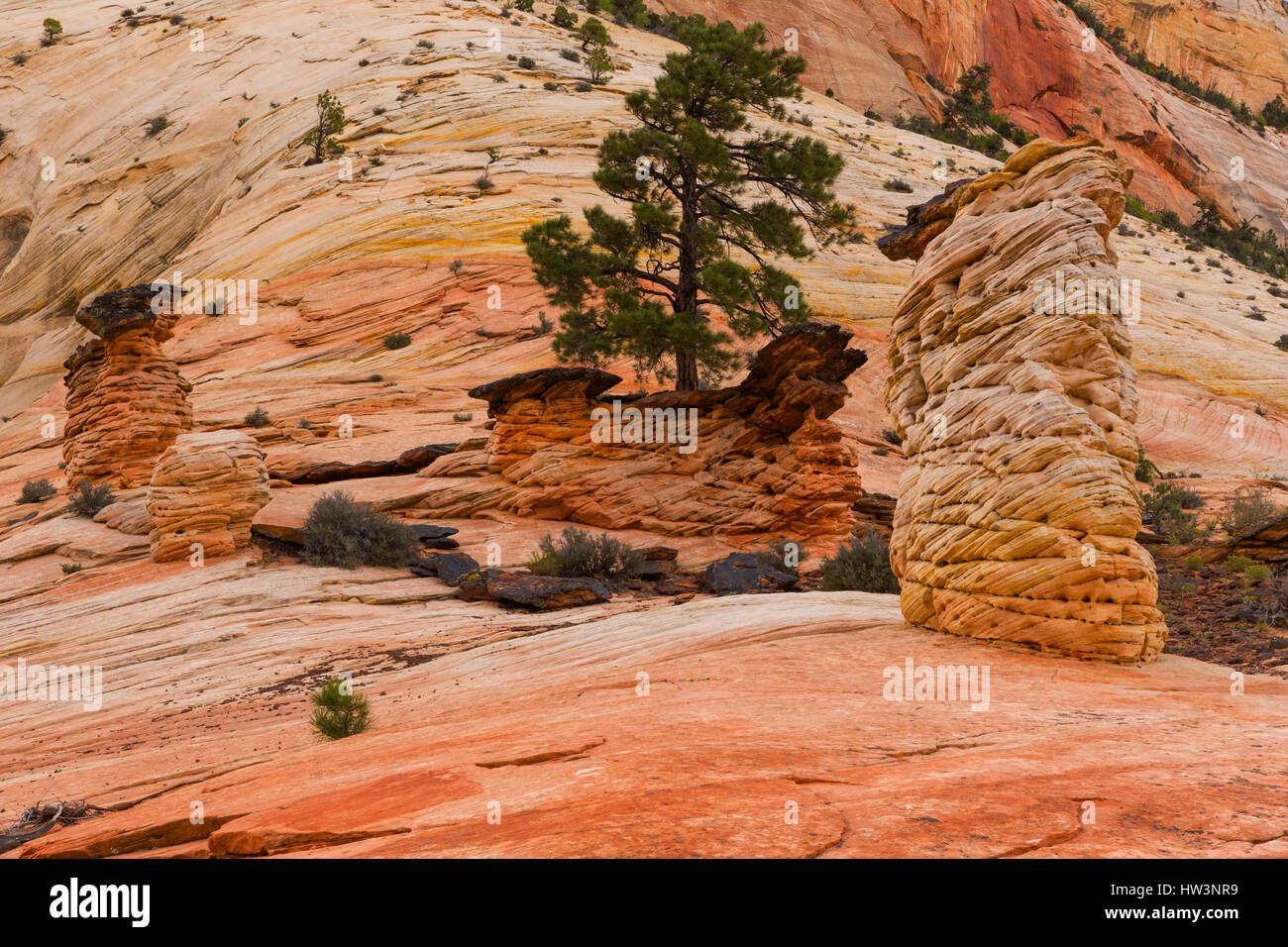 Rock formations, Zion National Park, UT, USA - Stock Image
