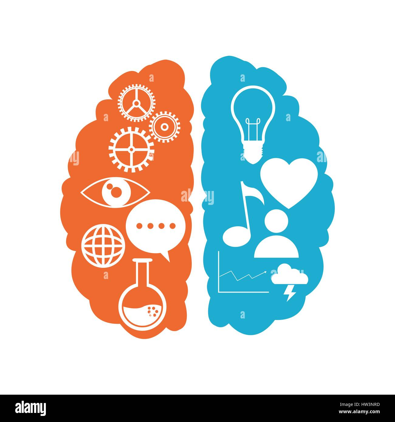 brain left right functions learn - Stock Image