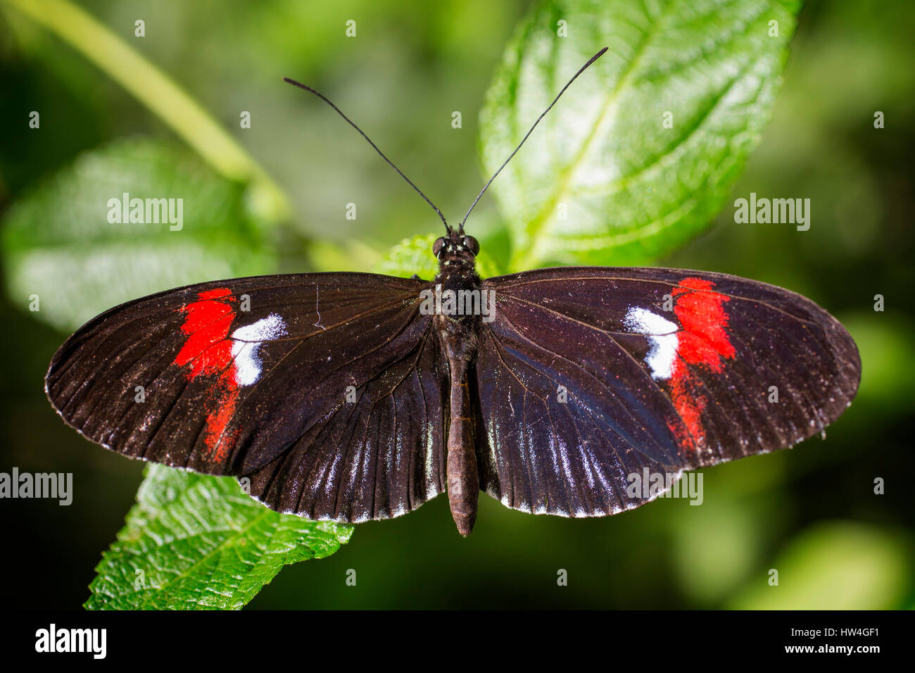Benalmadena Butterfly Park, Costa del Sol, Malaga, Spain Europe - Stock Image