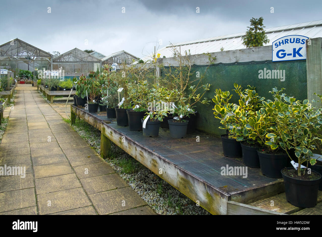 Garden Centre Plants Shrubs Sale Leisure Activity Gardening Business Display - Stock Image