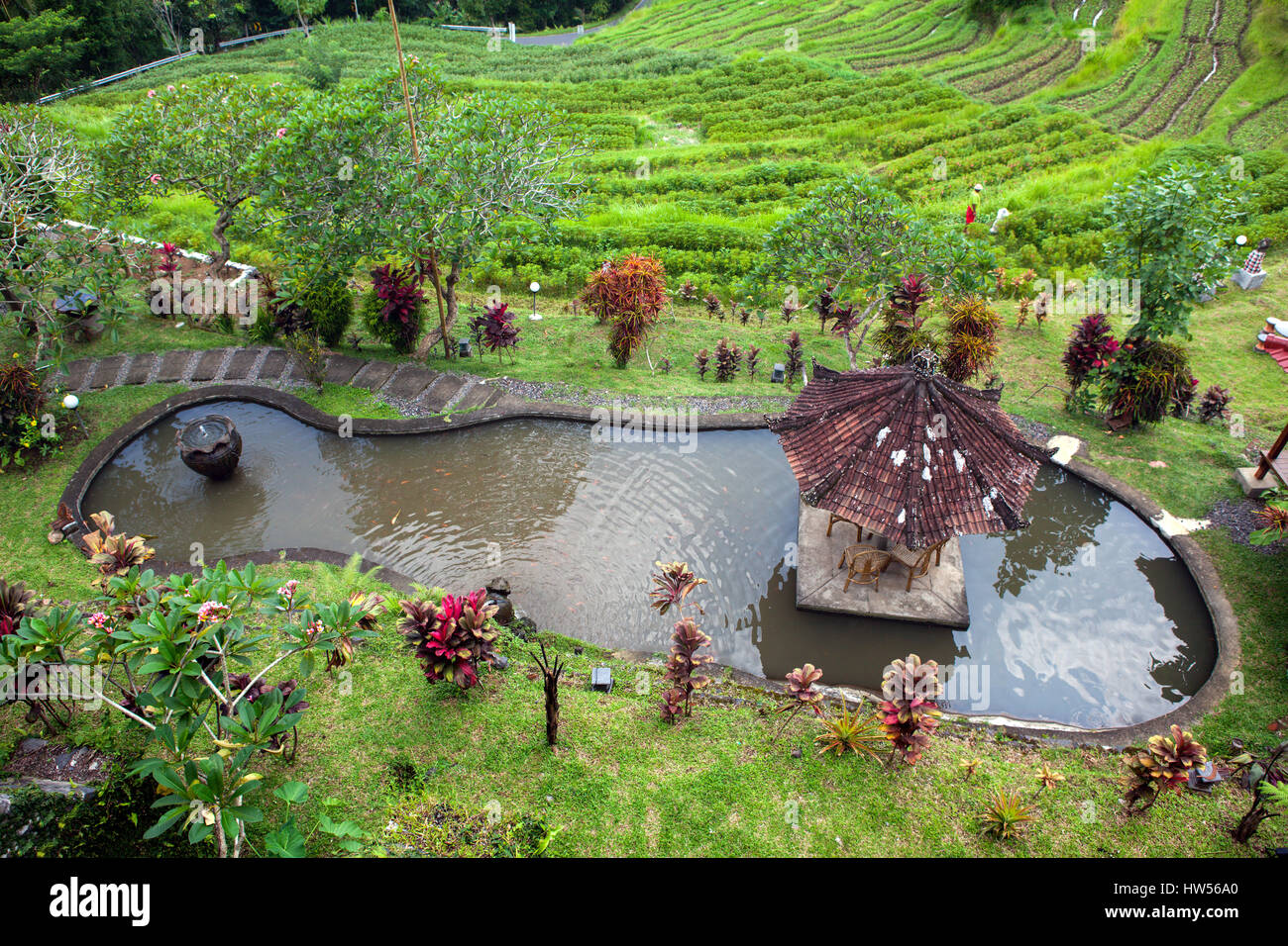Artificial lake with fish in the garden and rice terraces in the background of the jungle, lush tropical greenery, - Stock Image