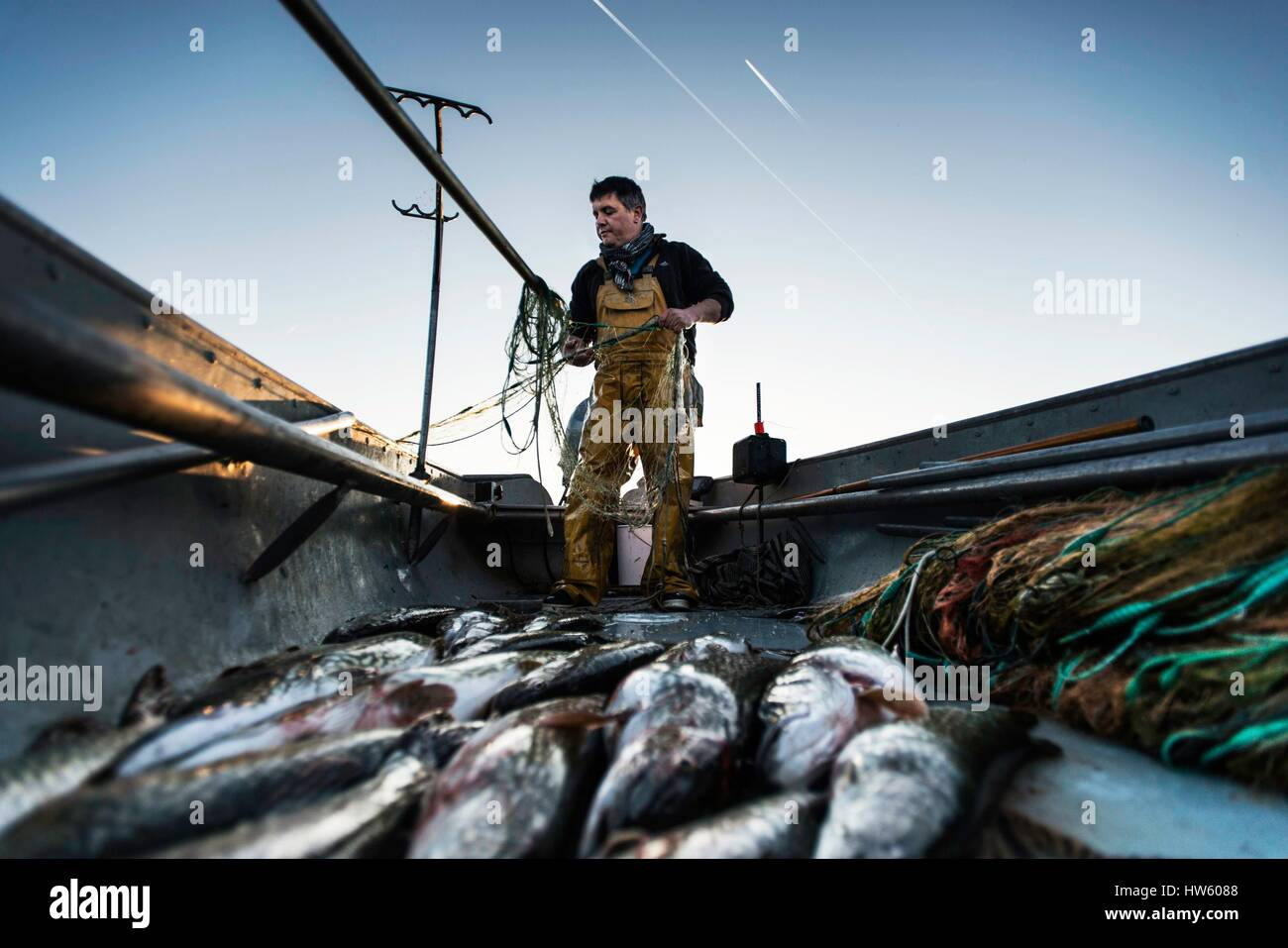 Switzerland, canton of Vaud, Morges, Manu Torrent, professional fisherman to Tolochenaz, opening day of the pike - Stock Image