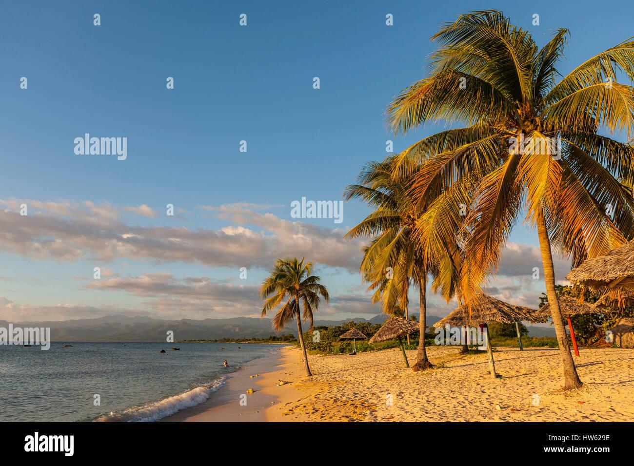 Cuba, Sancti Spiritus province, Trinidad de Cuba, palm Playa Ancon - Stock Image