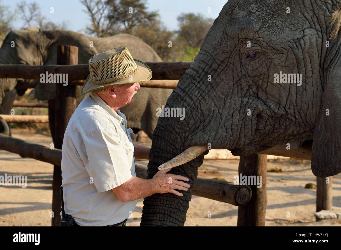 Zimbabwe Midlands Province Gweru Antelope Park home to ALERT (African Lion and Environmental Research Trust) the - Stock Image