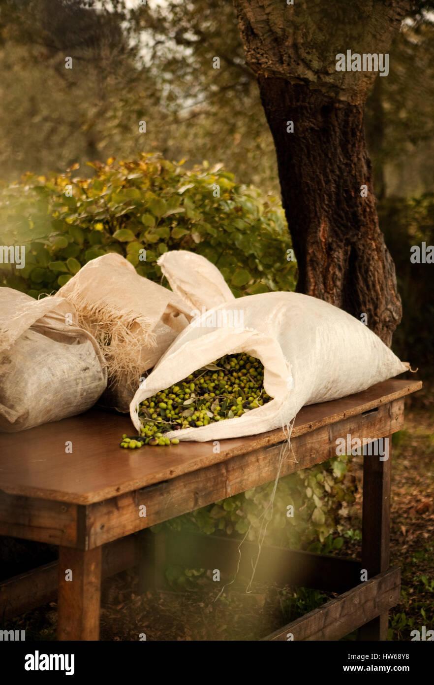 Olives - Stock Image