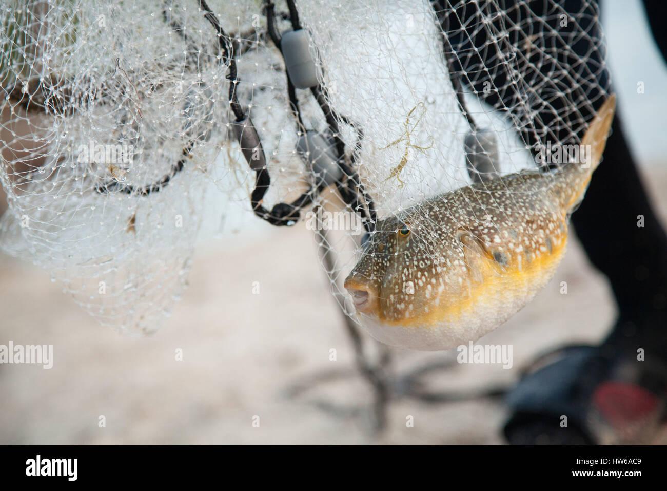 Fish in net - Stock Image