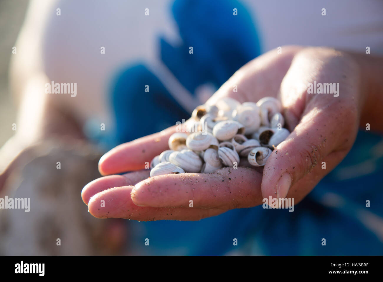 Collecting shells - Stock Image