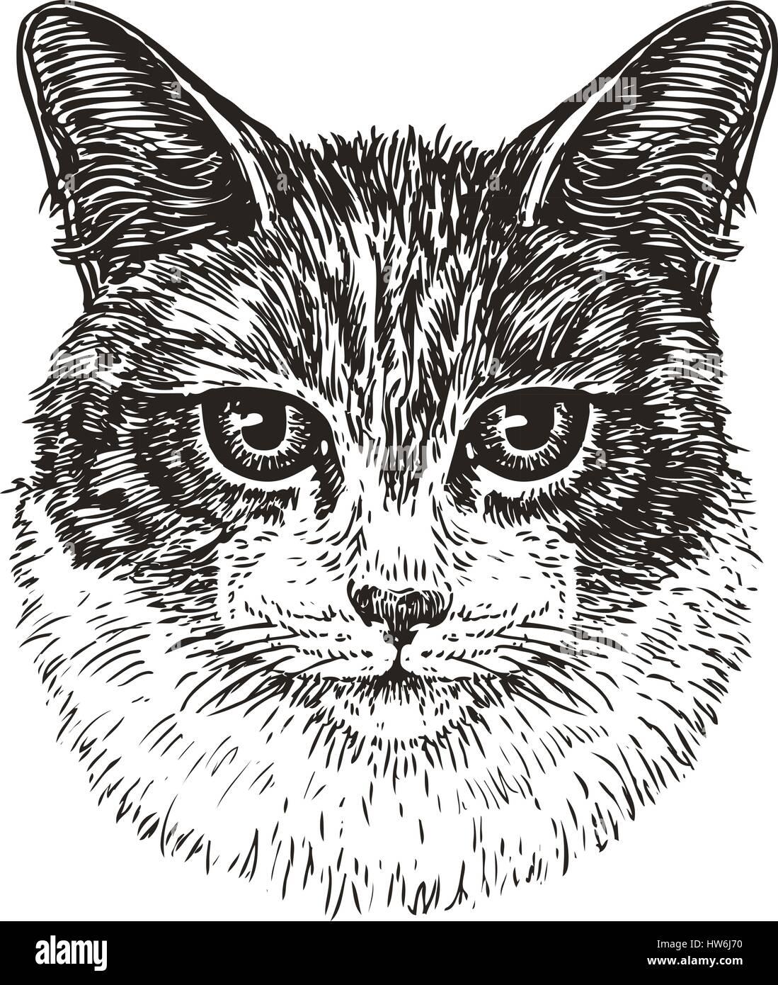 Drawn Portrait Of Cute Cat Animal Kitty Pet Sketch Vintage Vector Illustration