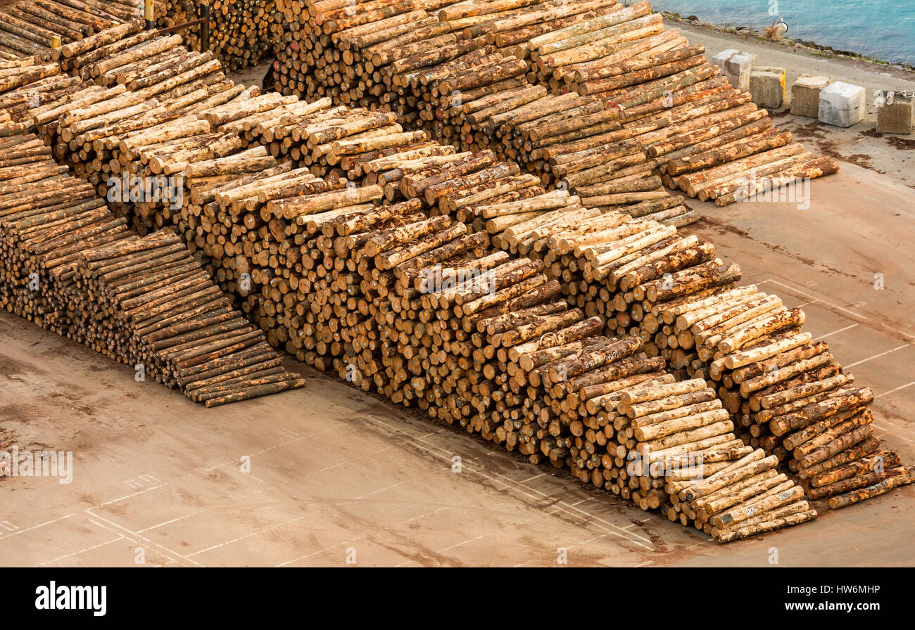 New Zealand logs all stack up wait for the next ship to come in. - Stock Image