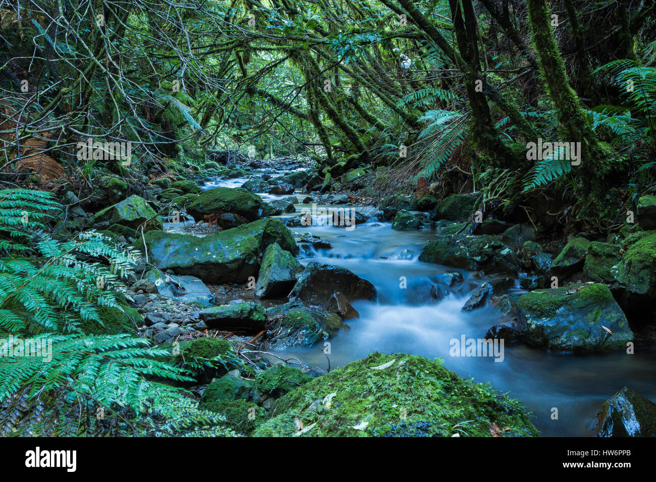 Soft flowing water passing through the New Zealand wonderful native bush. Stock Photo