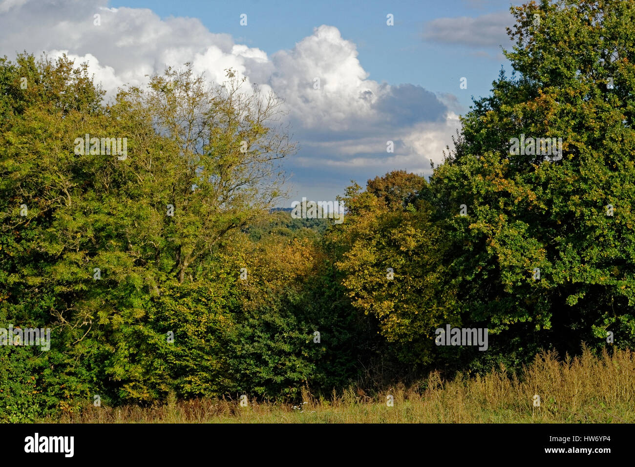 Wooded landscape (poplar, Oaks) in the fall, Valley of the river Mayenne Stock Photo
