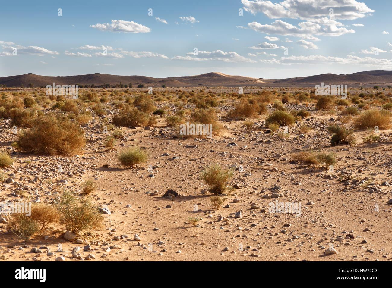 Small shrubs in the Sahara desert - Stock Image