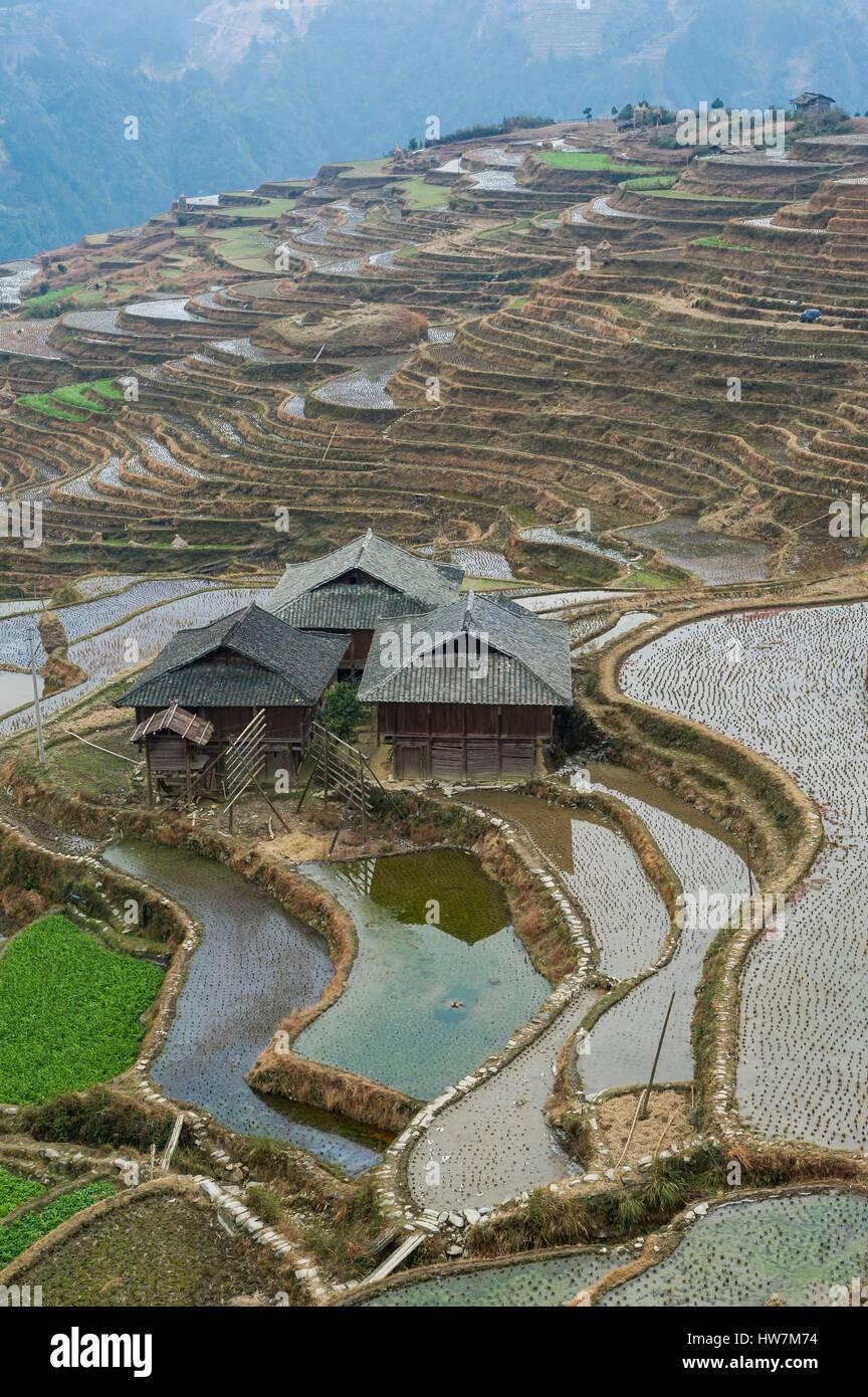 China, Guizhou, Jiabang, terraced rice fields - Stock Image