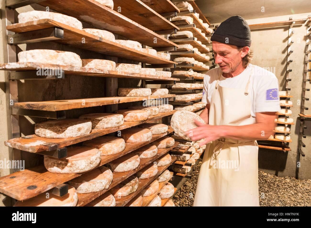 France, Haute Savoie, Morzine, Alpage Ecole Seraussaix, cheese in the cellar of Abondance AOP - Stock Image