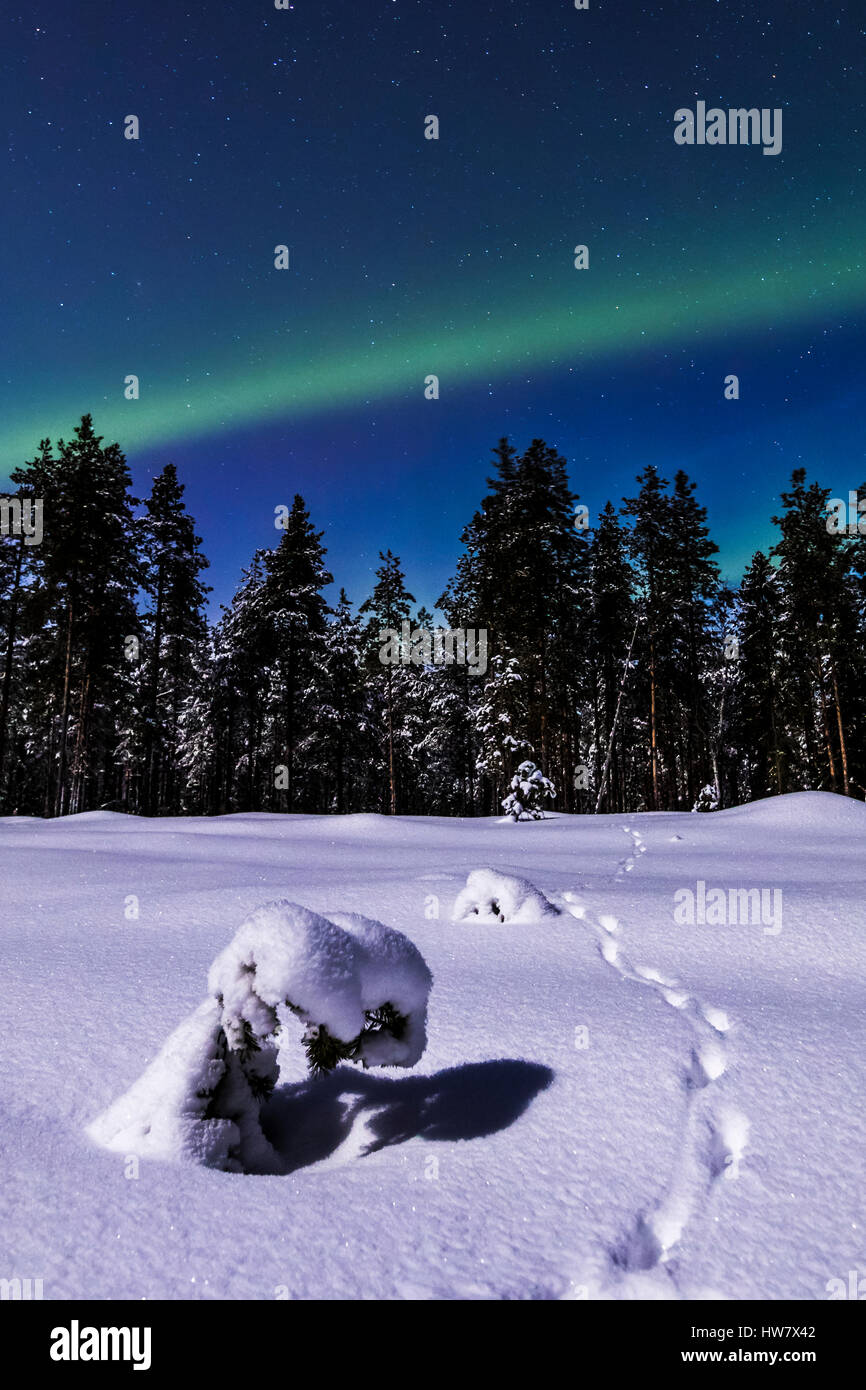 Red fox tracks and the northern lights - Stock Image