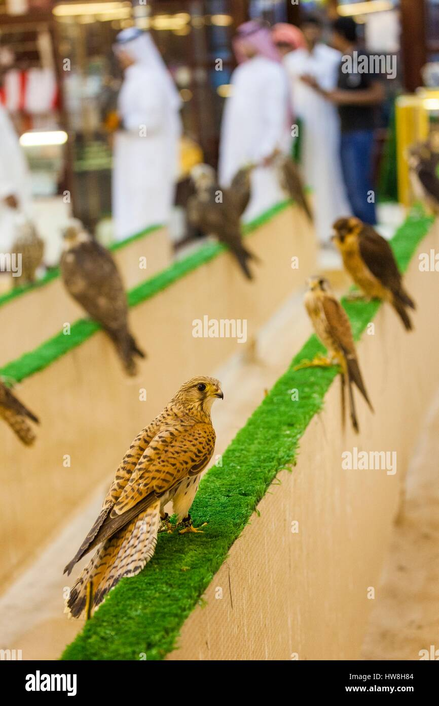 hunting hawks for sale