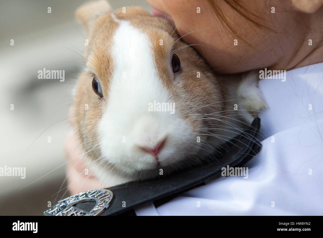 Animal rescue worker holding rabbit - Stock Image