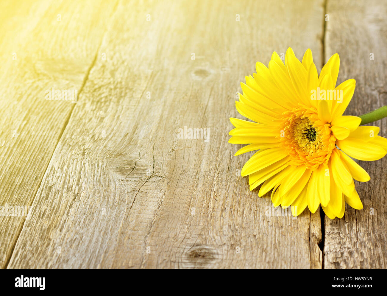 Yellow Gerbera On A Wooden Background Toning