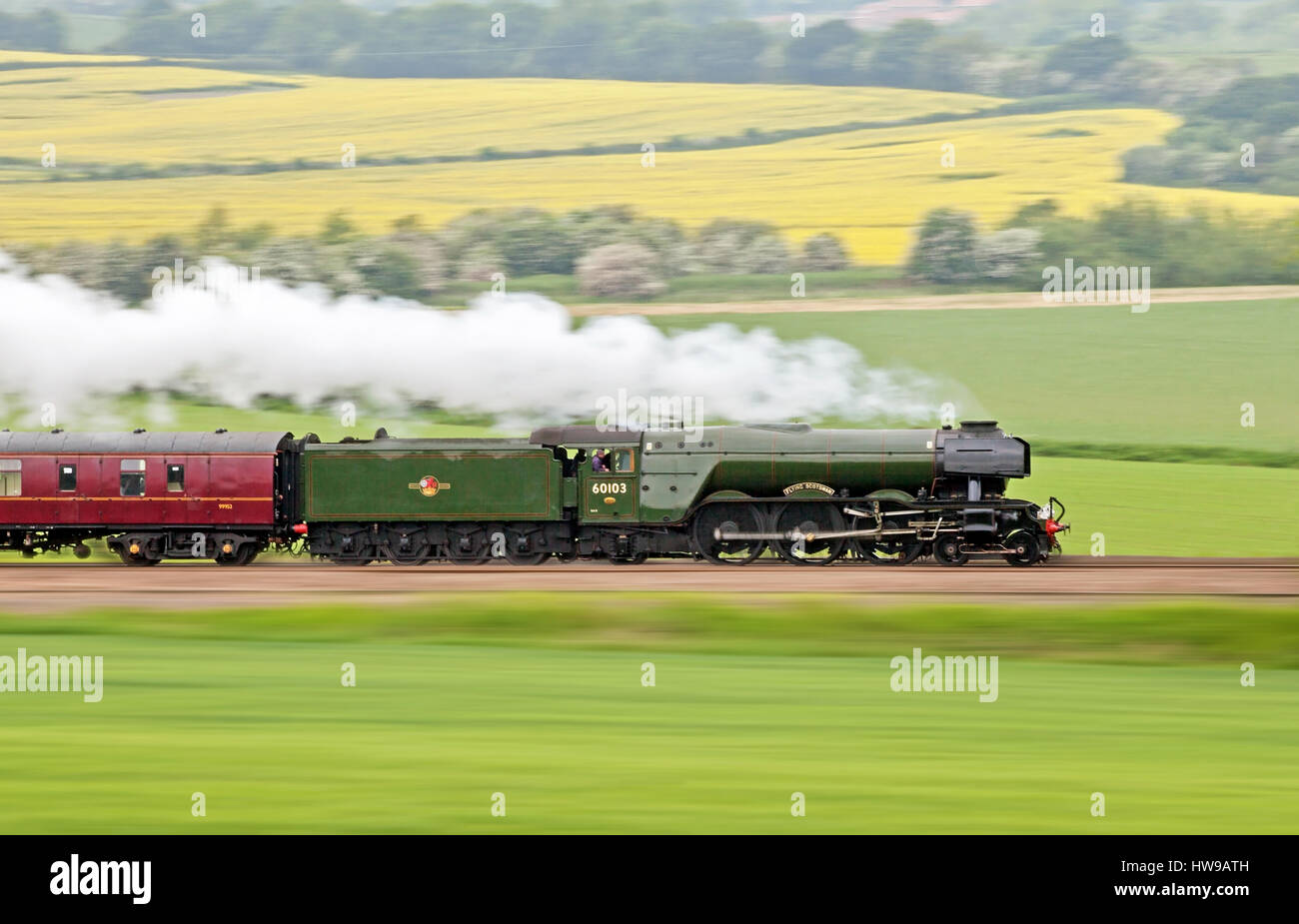 A3 Pacific No. 60103 'Flying Scotsman' races through the Derbyshire countryside near Staveley with a special - Stock Image