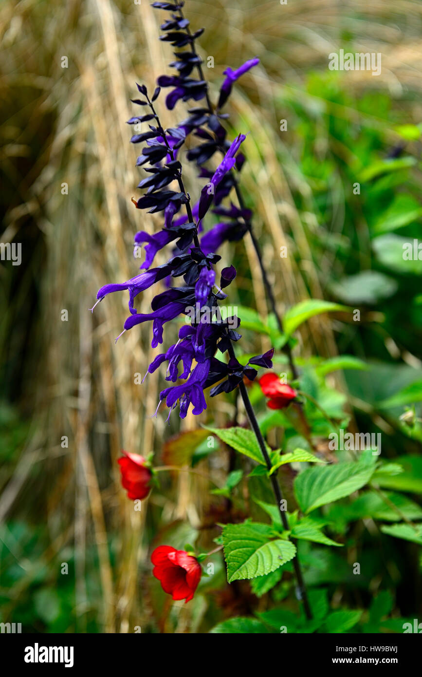 Red Purple Flower Combination Stock Photos & Red Purple ...