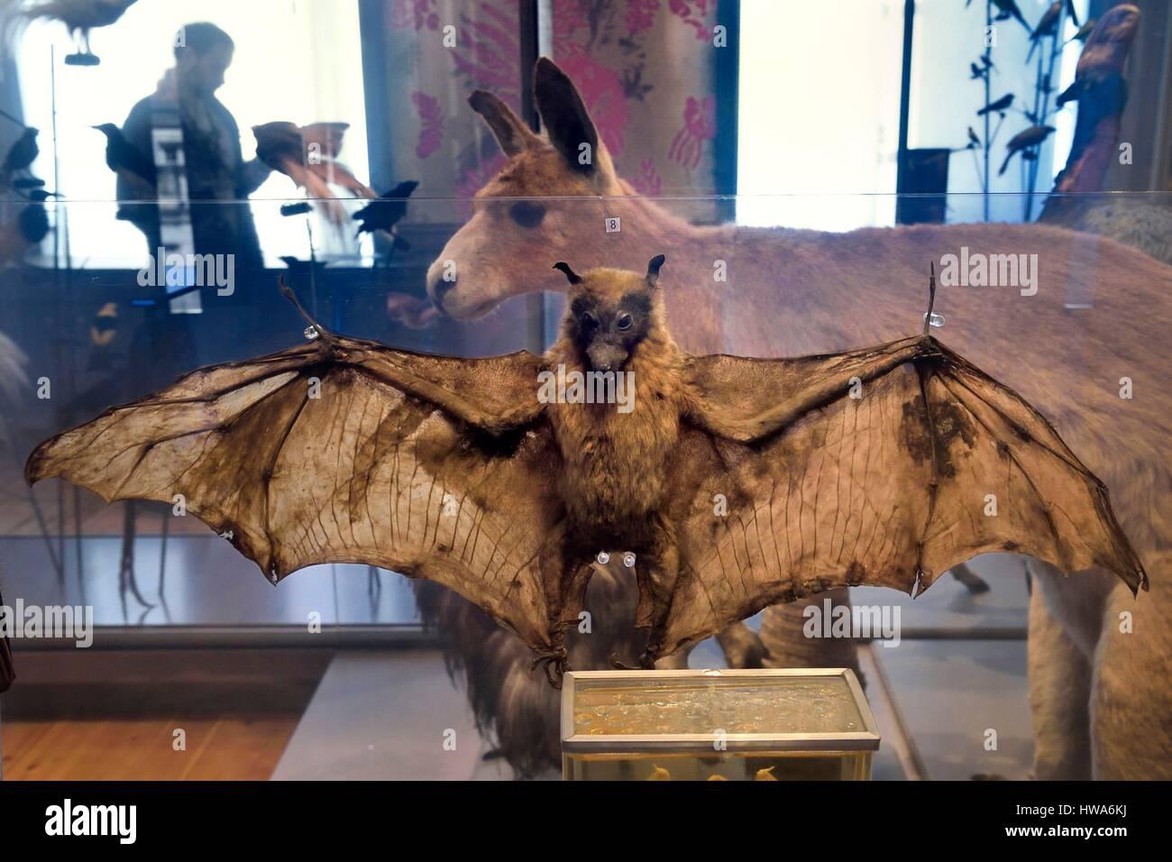 France, Charente-Maritime, La Rochelle, the Muséum d'histoire naturelle (natural history museum or museum - Stock Image