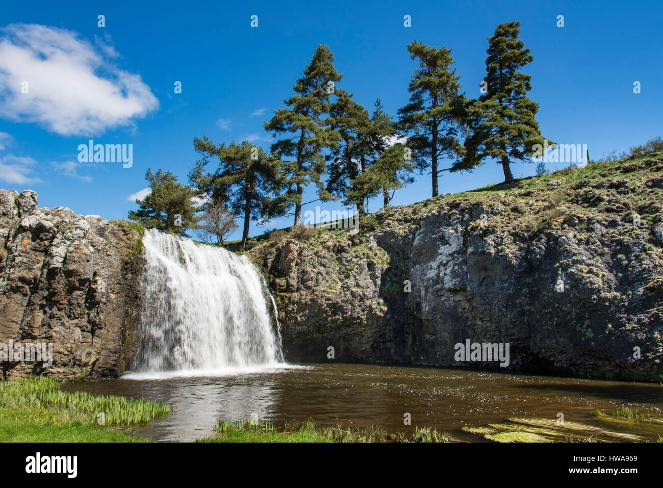 France  Auvergne  Cantal  Allanche  Regional Natural Park Of The Stock Photo  136065729