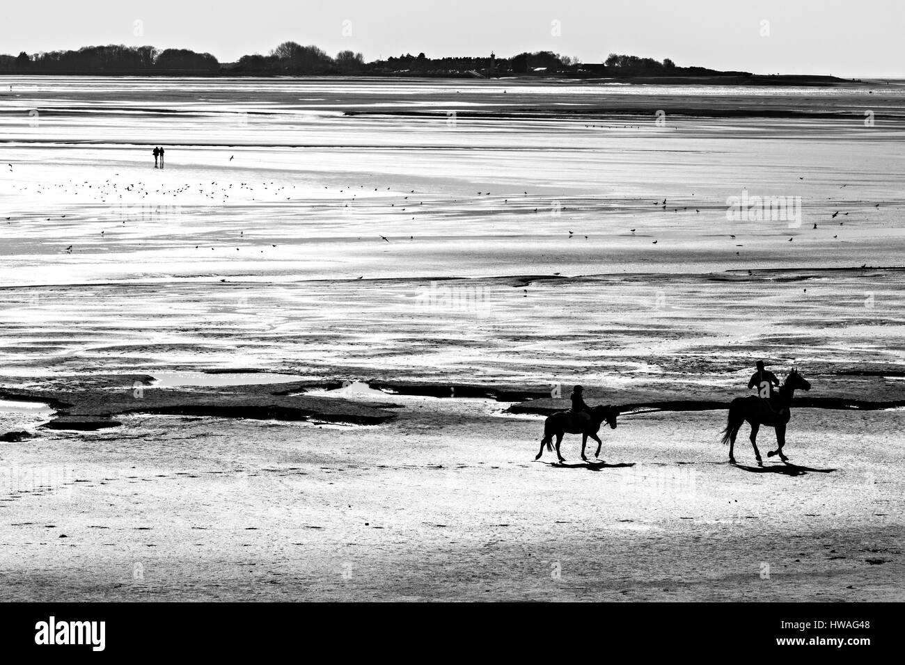 France, Somme, Baie de Somme, le Crotoy, Riders on the beach at low tide - Stock Image