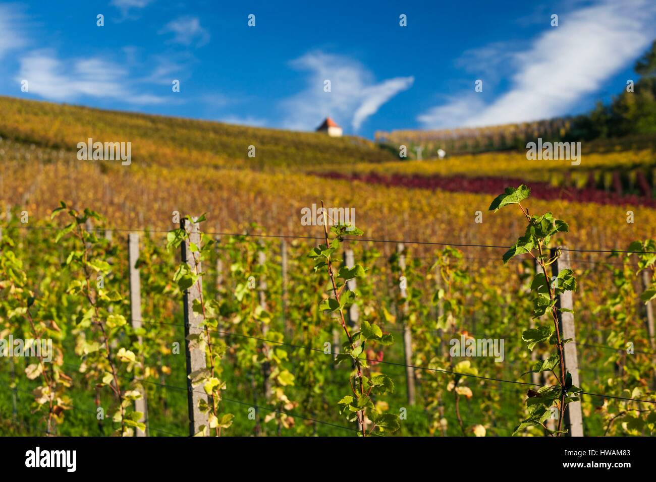 Germany, Baden-Wurttemburg, Black Forest, Gengenbach, vineyards and hilltop chapel, fall Stock Photo