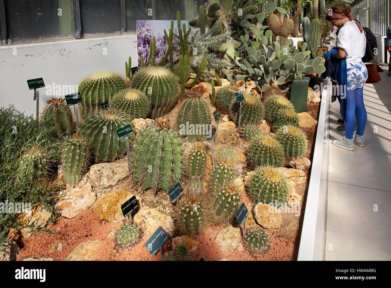 France, Paris, National Museum of Natural History, Large greenhouses of the Jardin des Plantes, Greenhouse deserts - Stock Image