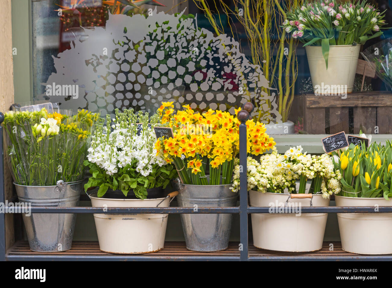 Daisy flowers for sale stock photos daisy flowers for sale stock flowers narcissi tulips stocks and freesias for sale at oops a daisy izmirmasajfo