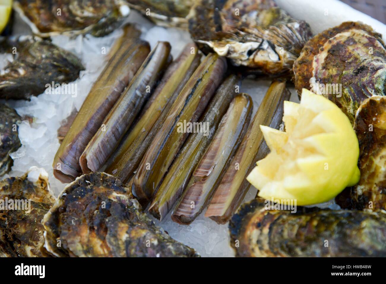 France, Herault, Frontignan, tray of oysters and knives accompanied by a lemon - Stock Image