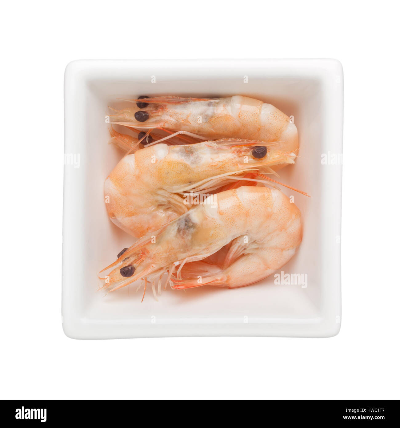 Cooked grey prawns in a square bowl isolated on white background - Stock Image