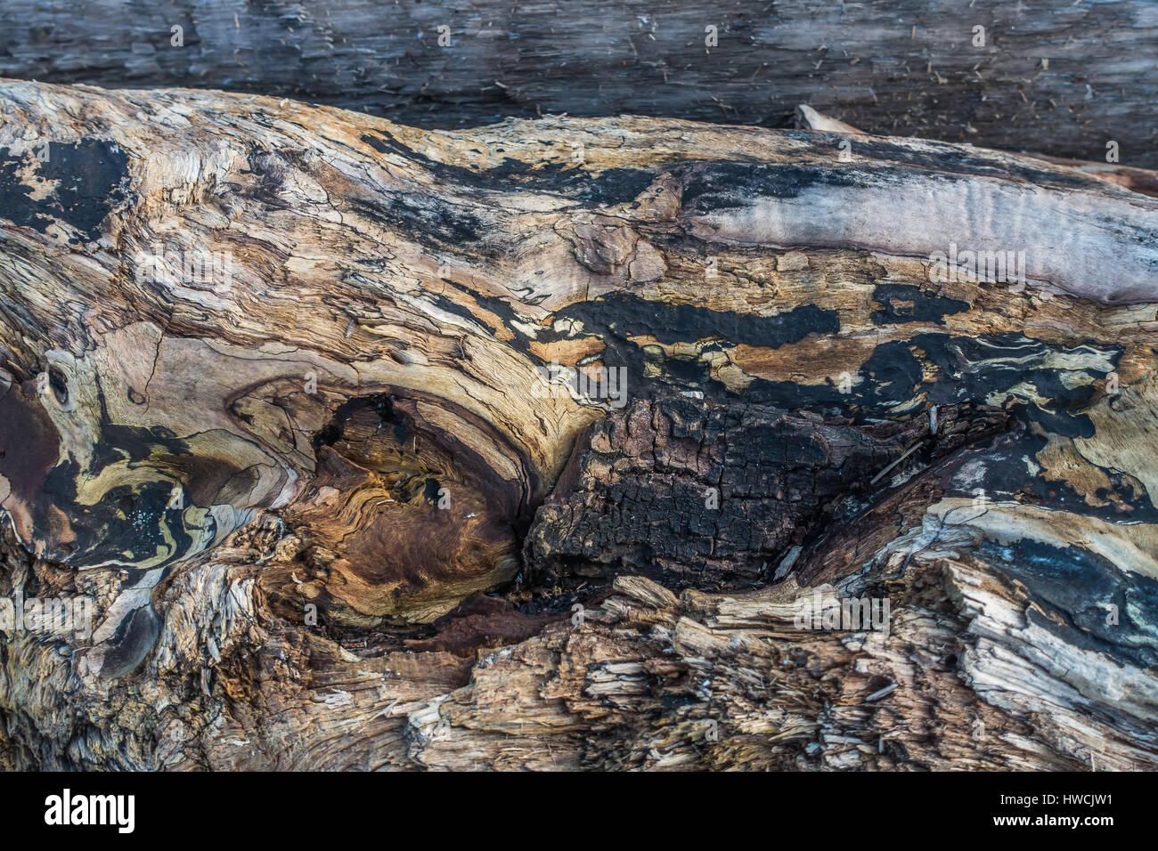 A closeup shot of a warped driftwood log. - Stock Image