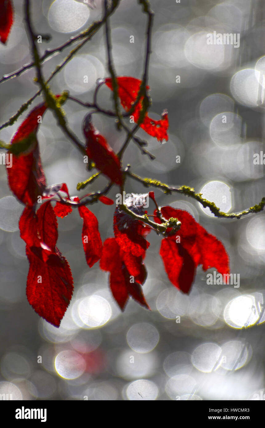 Autumn Leaves and Sparkling Water - Stock Image