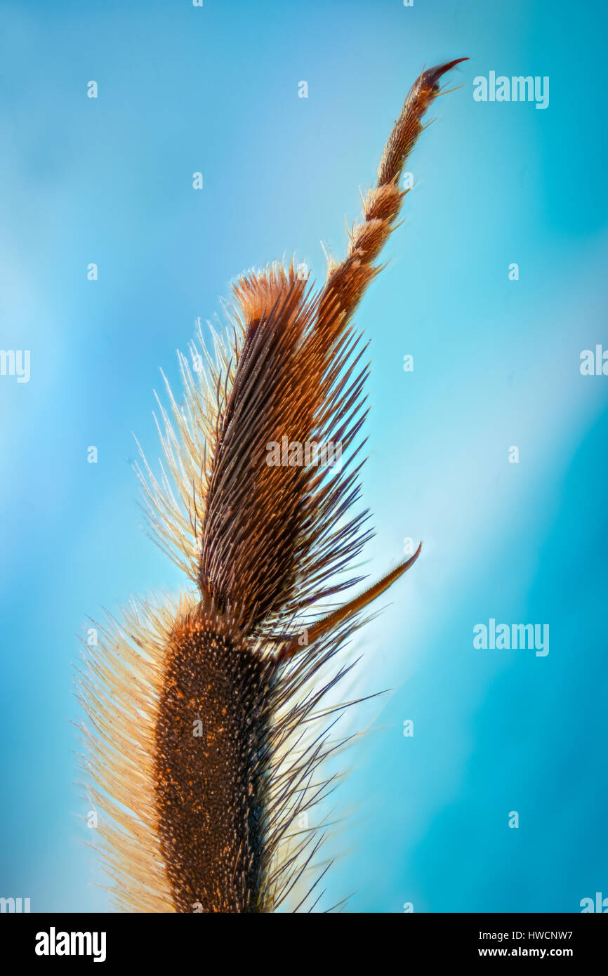 Extreme magnification - Bee foot - Stock Image