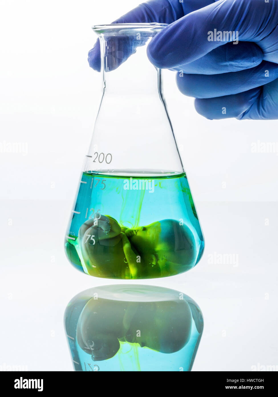 Model of an embryo in a lab glass. Symbolic photo for pregnancy by artificial conception. Abortion and genetic manipulation, - Stock Image