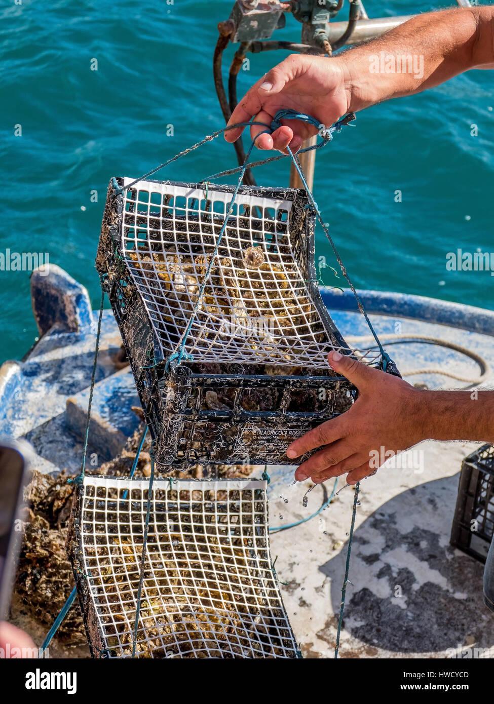 Oyster culture in Croatia, Austernzucht in Kroatien Stock Photo