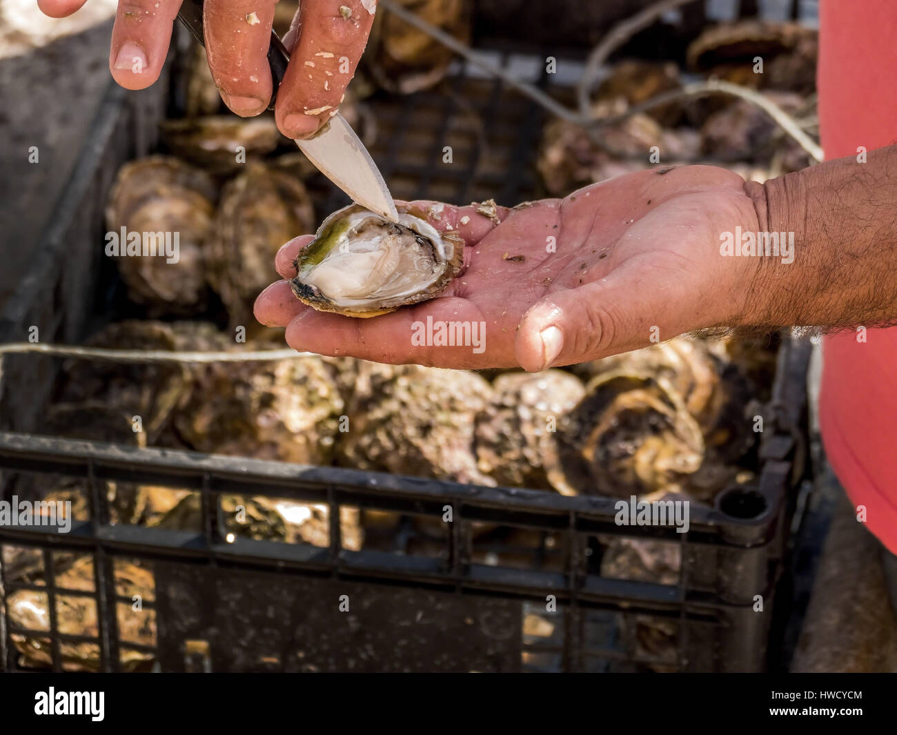 Oyster culture in Croatia, Austernzucht in Kroatien Stock Photo
