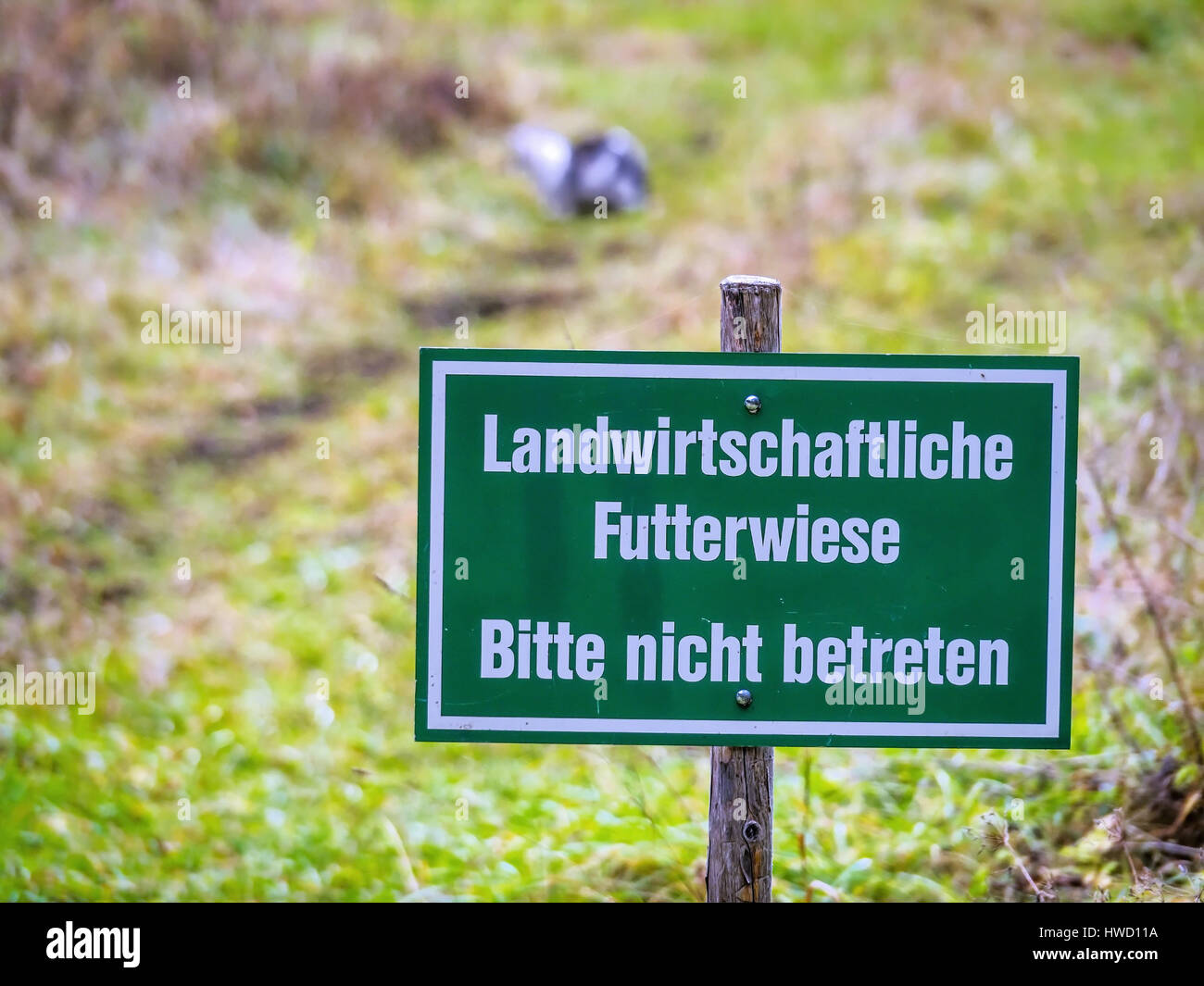 Sign that this do not enter to a feed meadow for the agriculture may be entered., Schild dass das betreten einer - Stock Image