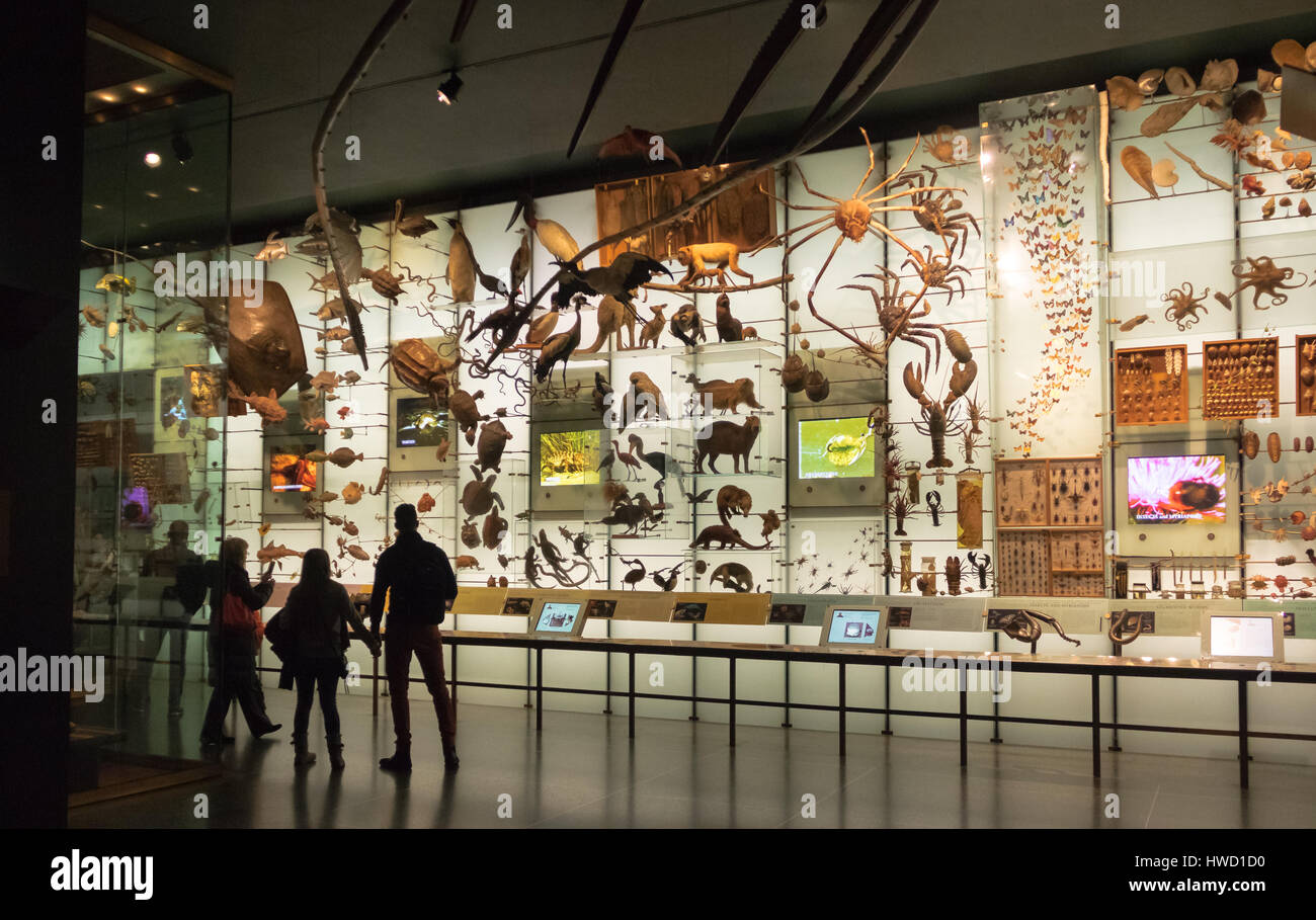 Hall of biodiversity at the American museum of Natural History (AMNH) - New York, USA - Stock Image