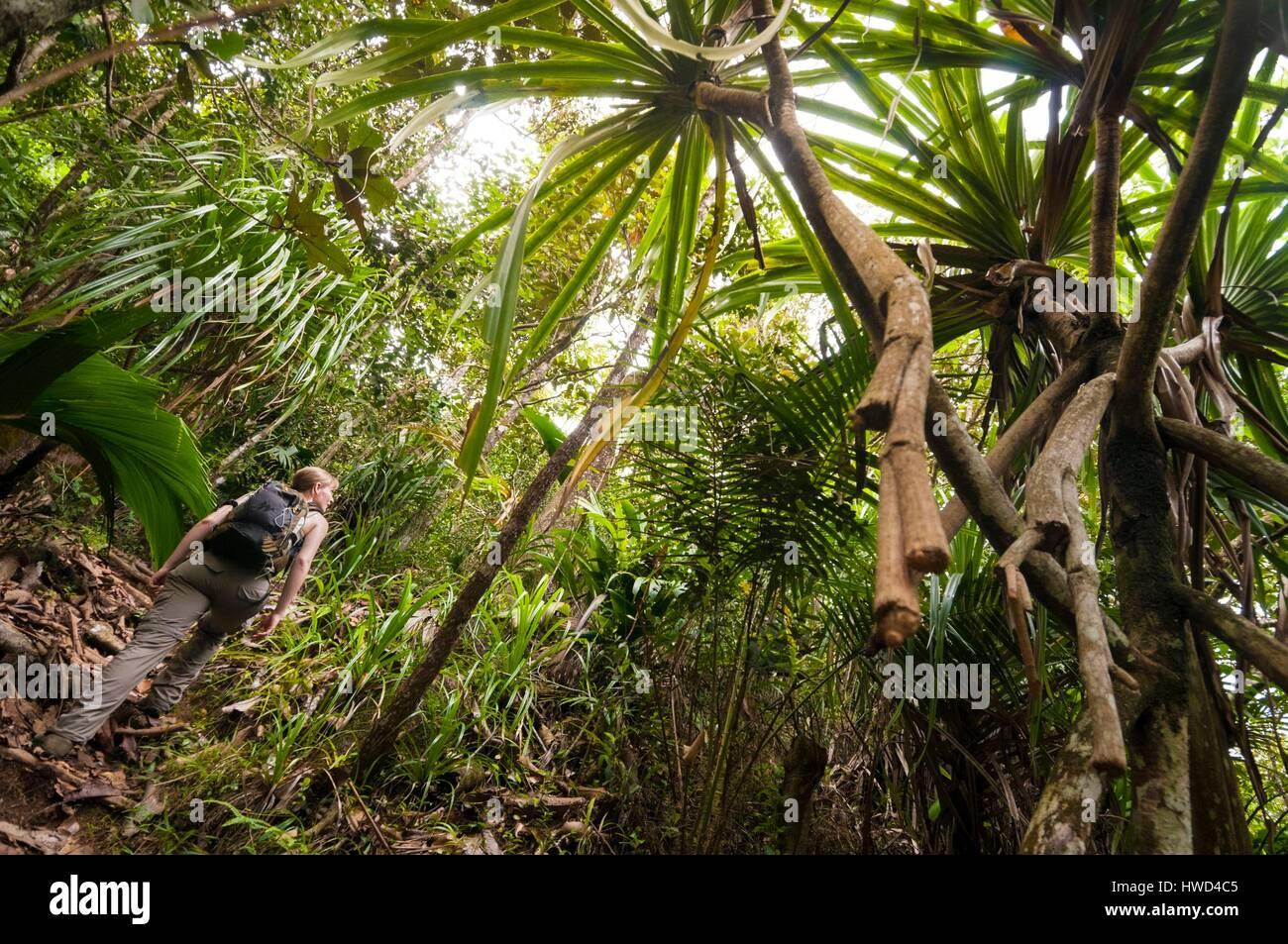 Seychelles, Mahe island, the Morne Seychellois National Park, hiking Copolia under the vacoas, MR yes - Stock Image