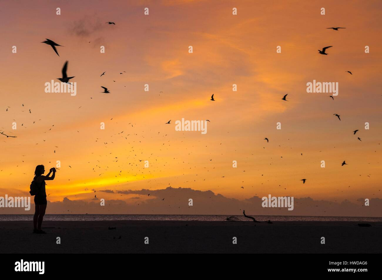 Seychelles,Bird Island,white sandy beach at sunset,observation of the colony of 1.5 million sooty terns (Onychoprion - Stock Image