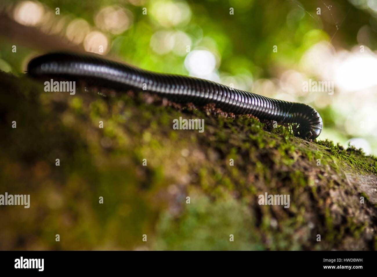 Centipedes Stock Photos & Centipedes Stock Images - Alamy